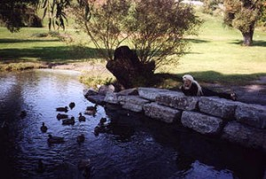 ON_gvb_autumn_ducks_sj