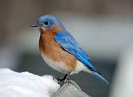 blue_bird_cloud